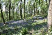 Ochils Woodland Park